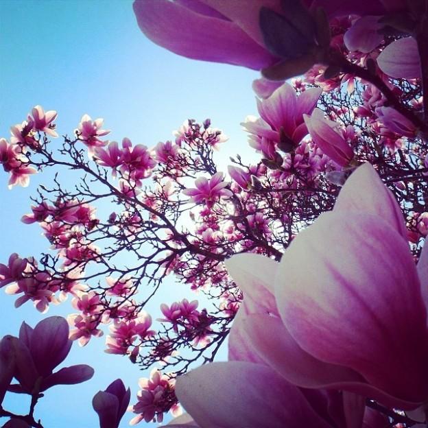 Instagram version of Winning Magnolia Photo