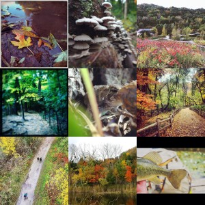 Fall4Ravines Collage 2